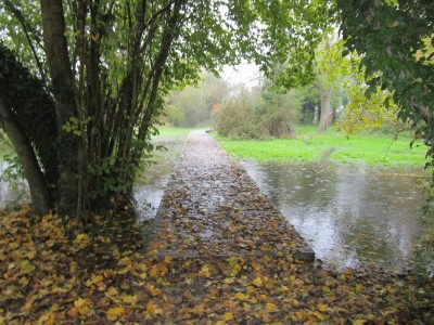 A429 lakeside dog walk near Cirencester, Gloucestershire - Driving with Dogs