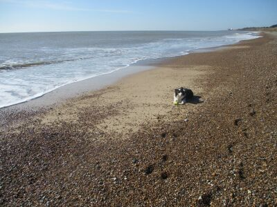 A12 dog-friendly cafe, pub and long beach walks, Suffolk - Driving with Dogs