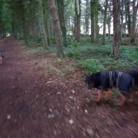 Southern Upland Way dog walk, Scotland - 20180815_192549.jpg