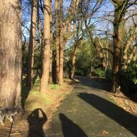 Morriston dog walk, Wales - E0A63027-CD5A-40CF-B1B3-ABE5D5A54046.jpeg