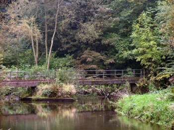 Millers Dale dog walk with dog-friendly pub, Derbyshire - Driving with Dogs