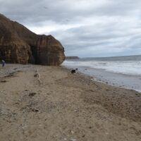 Heritage coast dog walks and beach, County Durham - P1020656.JPG