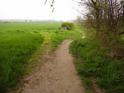 M11 Junction 9 dog walk and dog-friendly pub, Essex - Driving with Dogs