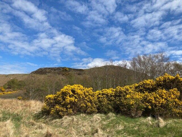Borlum Circuit - a wonderful walk with the dog, Scotland - Borlum 4.jpg