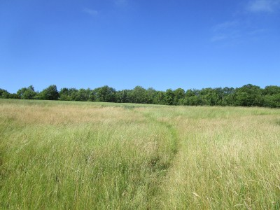 Dog walk and dog-friendly pub near Checkendon, Oxfordshire - Driving with Dogs