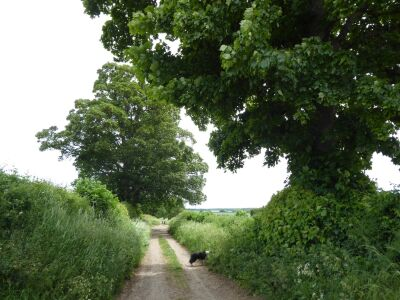 A61 dog walk and refreshments near Ripon, North Yorkshire - Driving with Dogs