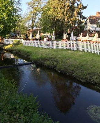 A338 dog-friendly pub and dog walk near Bournemouth, Hampshire - Driving with Dogs
