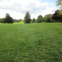 Prospect Park dog walk, Berkshire - Berkshire dog walk