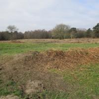 A22 Ashdown Forest dog walks, East Sussex - Sussex dog walks.JPG