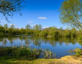 A130 country park dog walk and cafe, Essex - Driving with Dogs