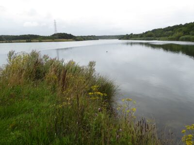 Lakeside dog walk with cafe and caravan parking, Northumberland - Driving with Dogs