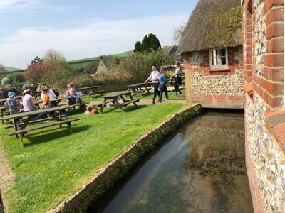 Dog-friendly pub with great food, and dog walks, Dorset - Driving with Dogs