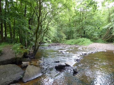 Forest dog walk and cafe near Durham, County Durham - Driving with Dogs
