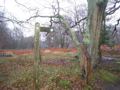 A heathland winter romp with the dog, West Sussex - Driving with Dogs