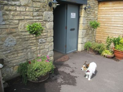 Dog-friendly pub and dog walk in the Cotswolds, Gloucestershire - Driving with Dogs