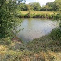 River Meadow Dog Walking Fields, Warwickshire - IMG_8182.JPG