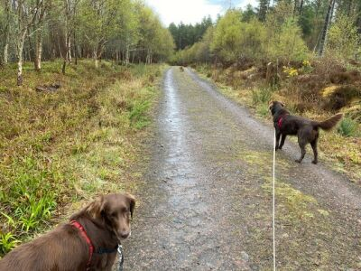 Skelbo Forest dog walk, Scotland - Driving with Dogs