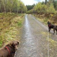 Skelbo Forest dog walk, Scotland - Skelbo 1.jpg