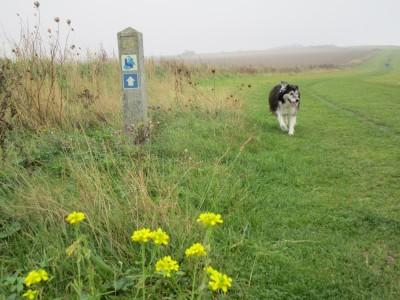 Coastal dog walks, dog-friendly beach and pub, Kent - Driving with Dogs