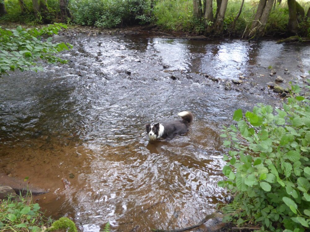Woodland dog walk and family attraction, Cumbria - Dog walks and refreshments near Penrith