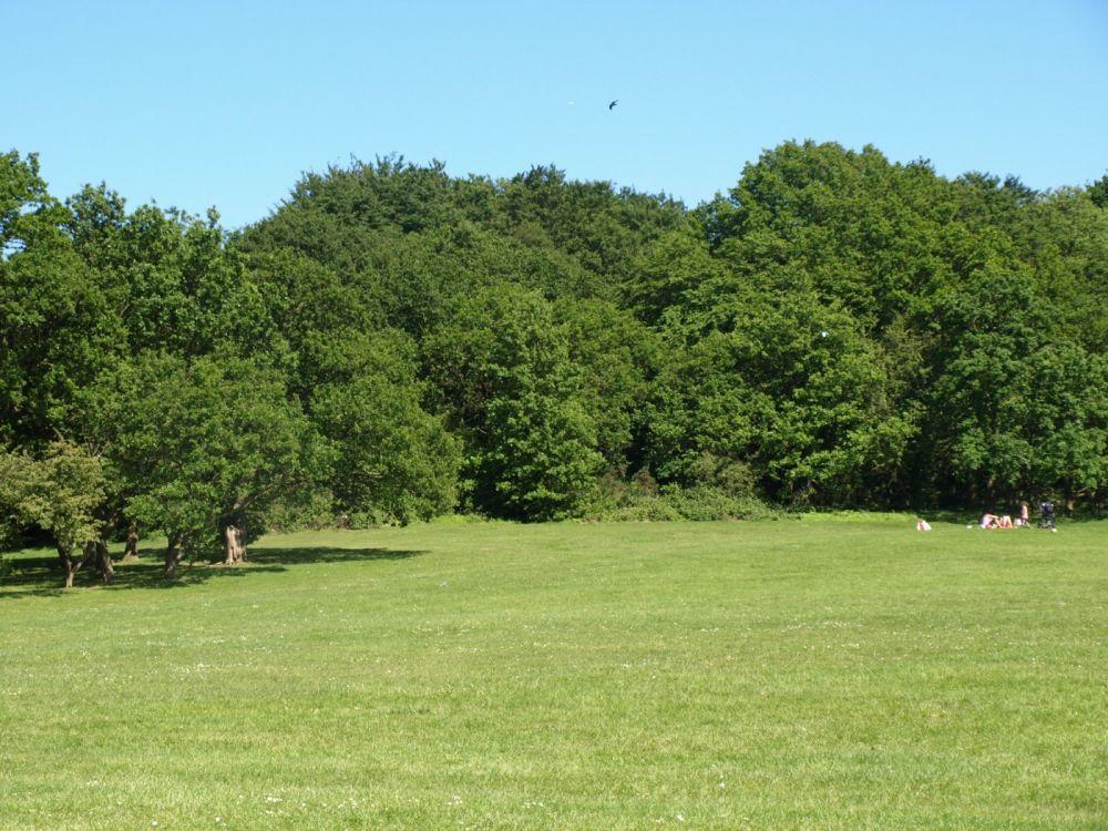 Ancient forest dog walk and dog-friendly pub near Chigwell, Essex - Essex Forest dog walk and dog-friendly pub.jpg