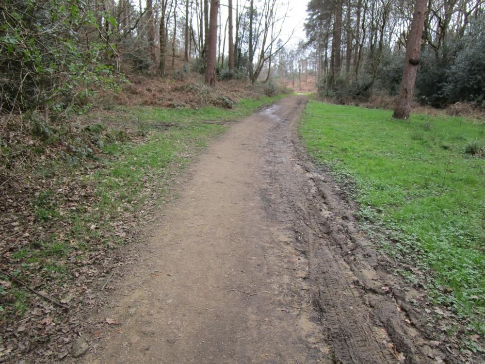 A25 woodland dog walk near Abinger Hammer, Surrey - Surrey dog walks.JPG