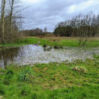 Local Dog Walk: Wheatacre Woods, Lancashire - IMG_20200307_143621.jpg