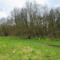 Local Dog Walk: Wheatacre Woods, Lancashire - IMG_20200307_141817.jpg