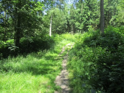 Woodland dog walk and ancient history, Herefordshire - Driving with Dogs