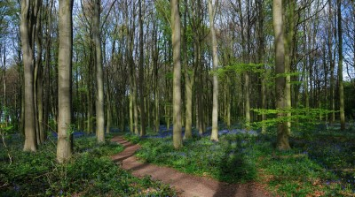Melton Woods dog walk, Yorkshire - Driving with Dogs