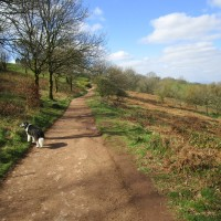 A49 dog-friendly pub and dog walk, Worcestershire - Worcestershire dog walk and dog-friendly pub.JPG