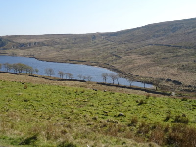 Remote moorland dog walk, Yorkshire - Driving with Dogs