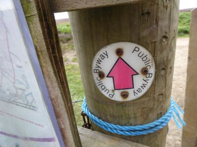 Forest and Moorland dog walks, Northumberland - Driving with Dogs