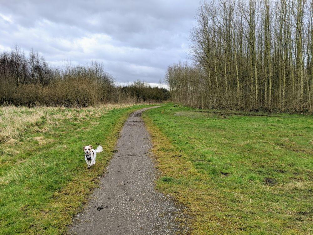 Local Dog Walk: Wheatacre Woods, Lancashire - IMG_20200307_143844.jpg