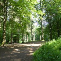 A694 Woodland dog walk, Tyne and Wear - Dog walks in County Durham