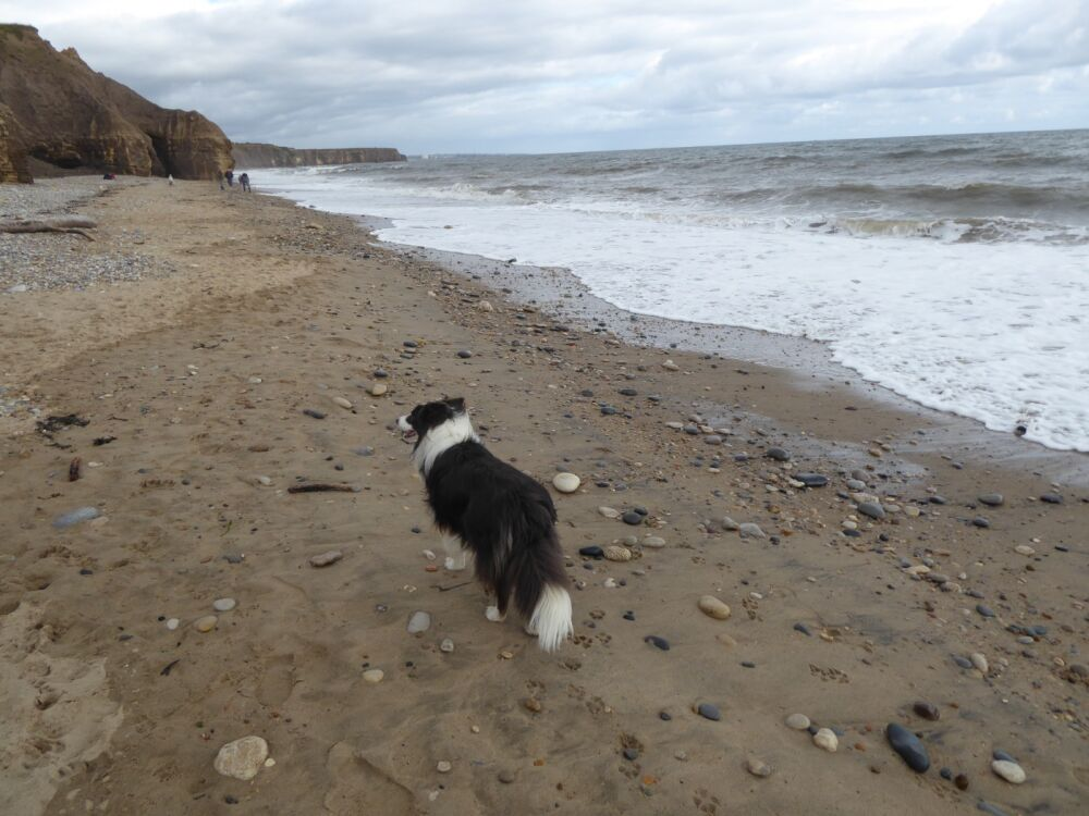 Heritage coast dog walks and beach, County Durham - P1020652.JPG