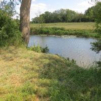 River Meadow Dog Walking Fields, Warwickshire - IMG_8181.JPG