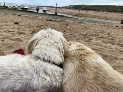 Summerleaze dog-friendly beach, Cornwall - Driving with Dogs