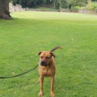 Holywell dog walk, Clwyd, Wales
