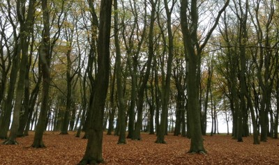 A420 woodland walk near Lambourn, Berkshire - Driving with Dogs