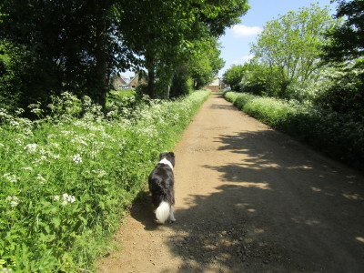 Old dog-friendly pub and dog walk, Northamptonshire - Driving with Dogs
