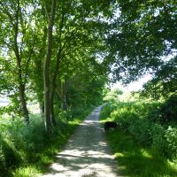 A walk on the Viking Way near Horncastle, Lincolnshire - Lincolnshire dog walk