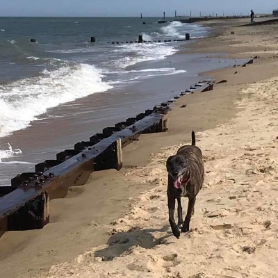 Eccles dog-friendly beach and cafe, Norfolk - Driving with Dogs