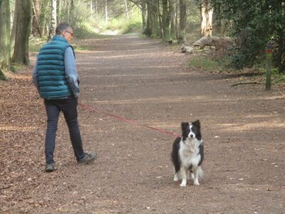 Woodland dog walk with loads of paths, Norfolk - Driving with Dogs