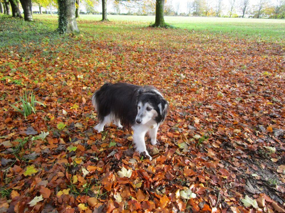 A329 dog-friendly pub and dog walk near Reading, Berkshire - Berkshire dog-friendly pub and dog walk