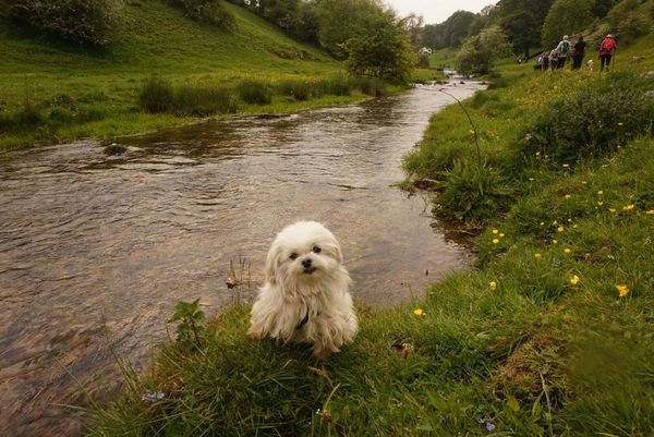 Best places for dogs to swim in the Peak District 2020