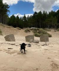 Roseisle country park with the dog, Scotland - 7F26CF6A-75C6-40DA-8777-0A264C09B6B4.jpeg