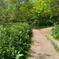 Forfar Loch dog walk, Scotland - E23EAE08-862A-4829-81E7-C70192EC1826.jpeg