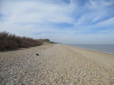 Dog walk on Heath and Beach near Westleton, Suffolk - Driving with Dogs