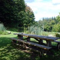 A286 woodland walk and a dog-friendly inn, West Sussex - Sussex dog-friendly pub and dog walk